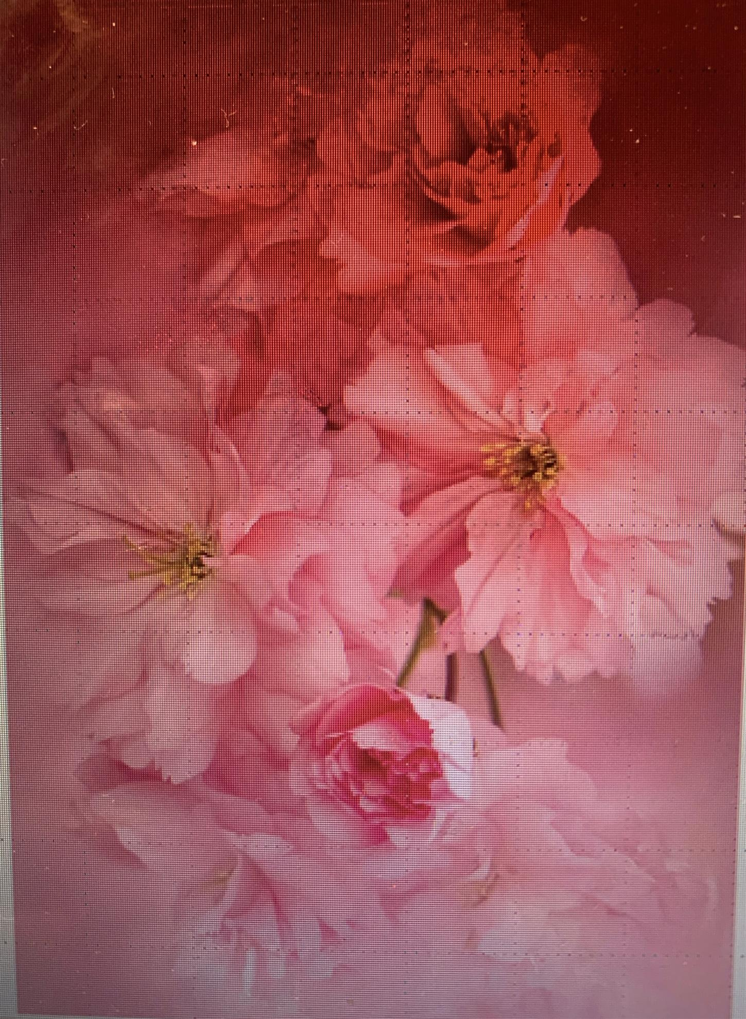 LDS Young Women/'s Values Floral Fabric by April Cobb 56 wide Fabric