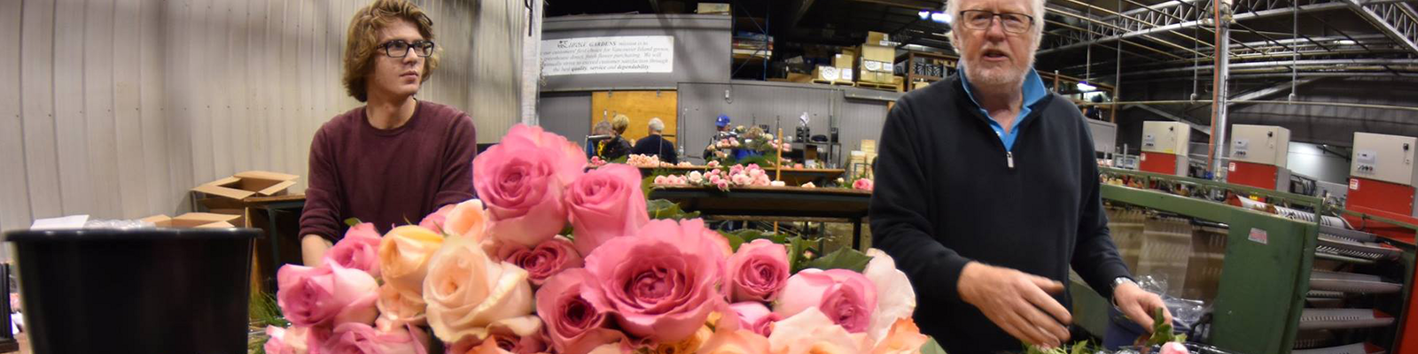 Sorting Roses for the Annual Sale