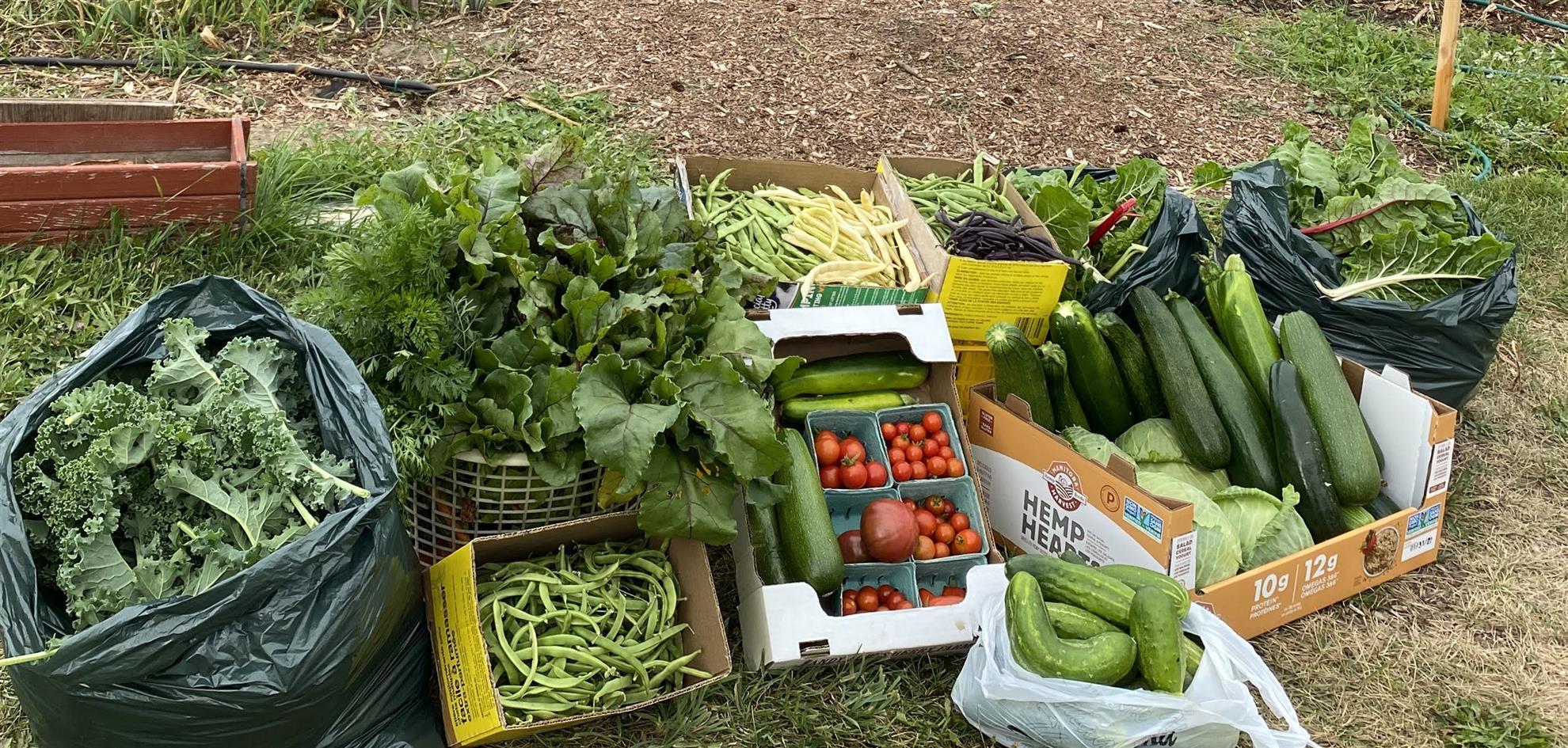 Community-Garden-harvest.jpg