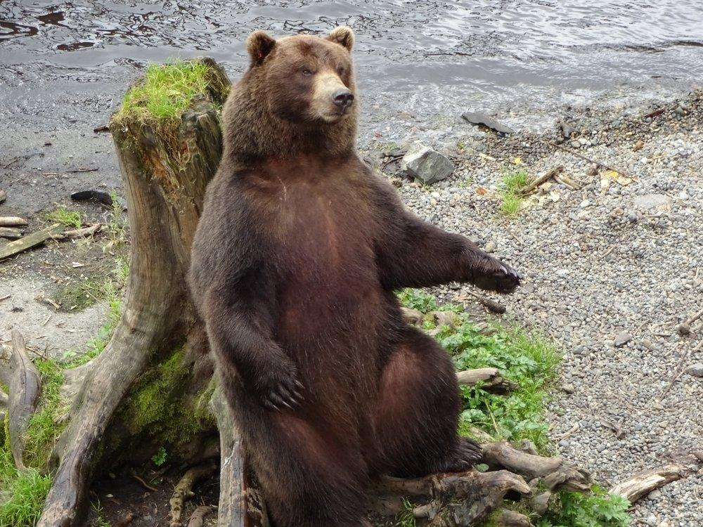 453ce11724c release rehabbed bears back into the wild. As a 501(C)3 not-for-profit  organization