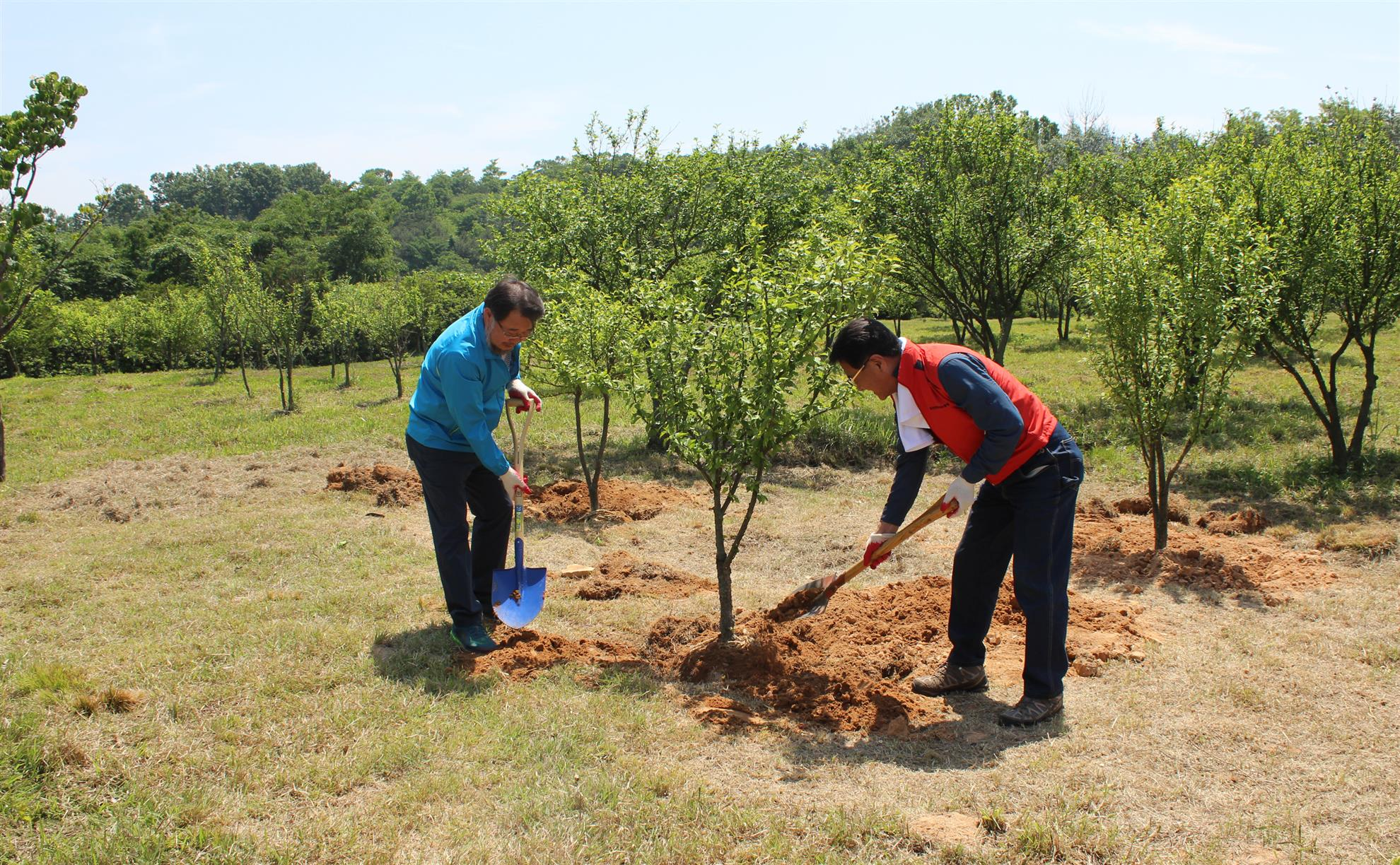 Rotarians from across Korea plant Rose of Sharon trees at the Independence Hall museum in Cheonan, South Korea