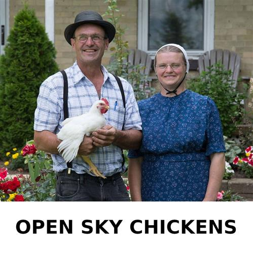 Open Sky Chickens
