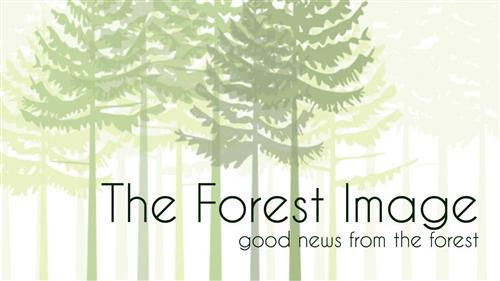 The Forest Image