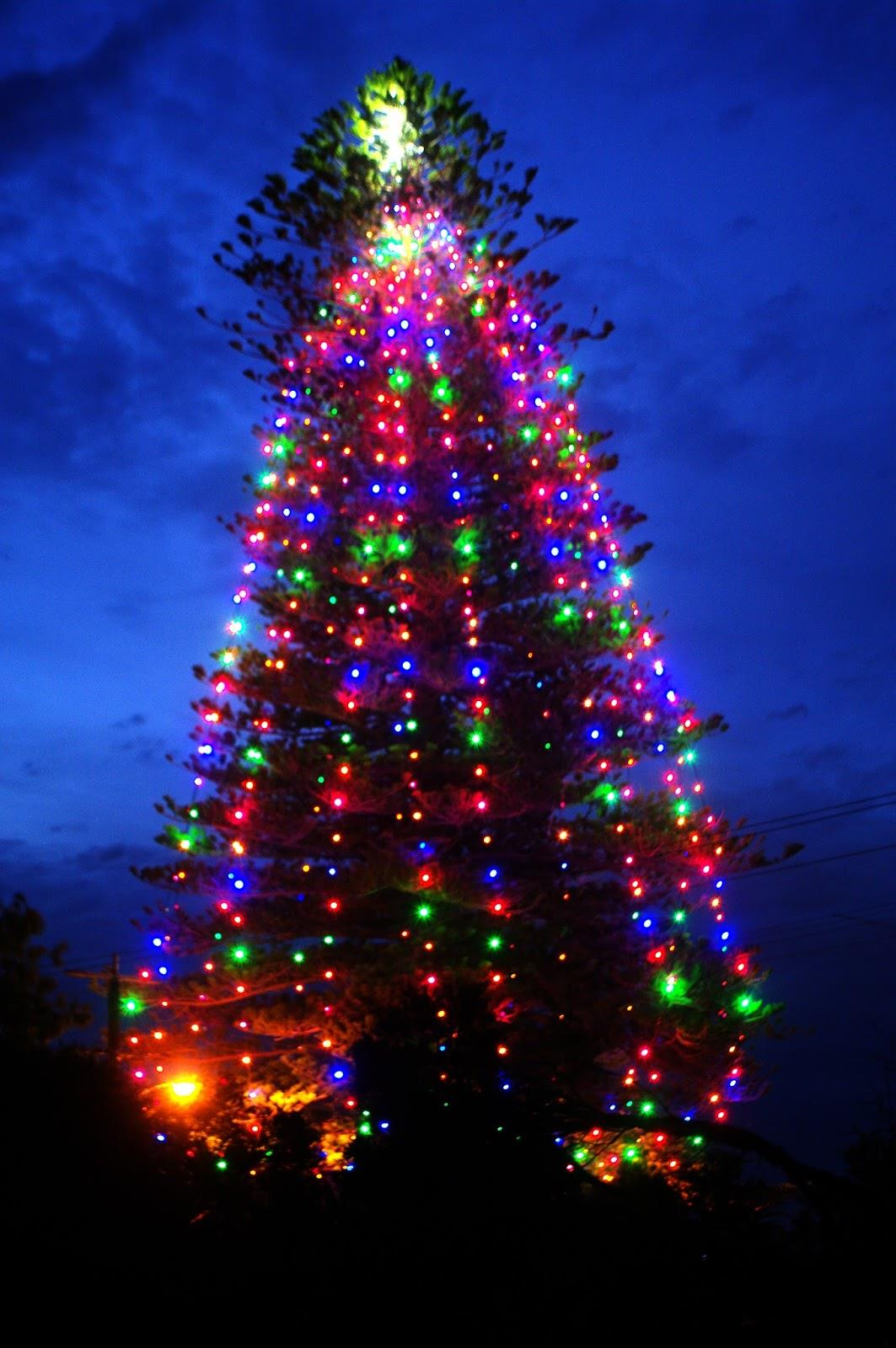 Christmas Tree Lights Australia Lighting Martin Place 25 Light Sequencer Using Xmas Lamps Holiday Vintage In At Night Stock Photo Image Of