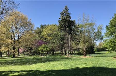 Presidential Tree Grove - Gillson Park
