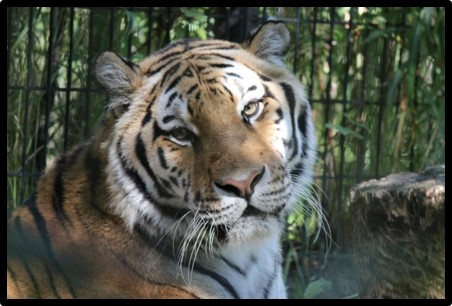 Alaska Zoo Auction Item   Rotary Club of Anchorage East