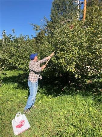 Apple Picking for the Food Bank