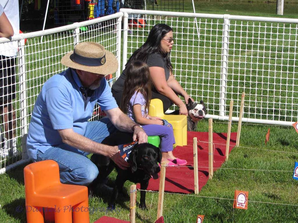 Dogs for a Cause 2