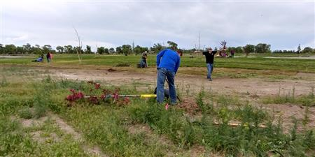 Planting Trees at Rigby Lake Island