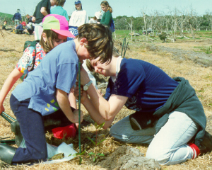 Seedlings being planted out by staff and students of Canterbury Primary School.