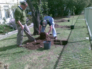 Doug Hawley and Trevor Donkin planting fruit trees at the Markham Estate.