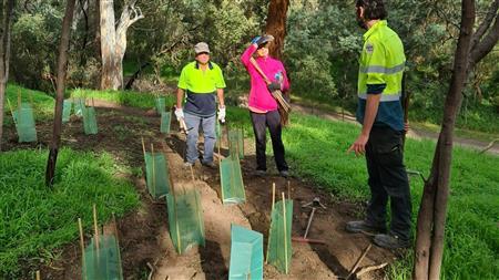 Tree Planting Yarra Bend
