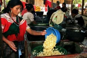 Image result for Joyabaj Guatemala Rotary farmers