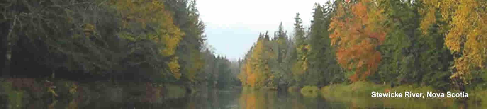 Stewicke River