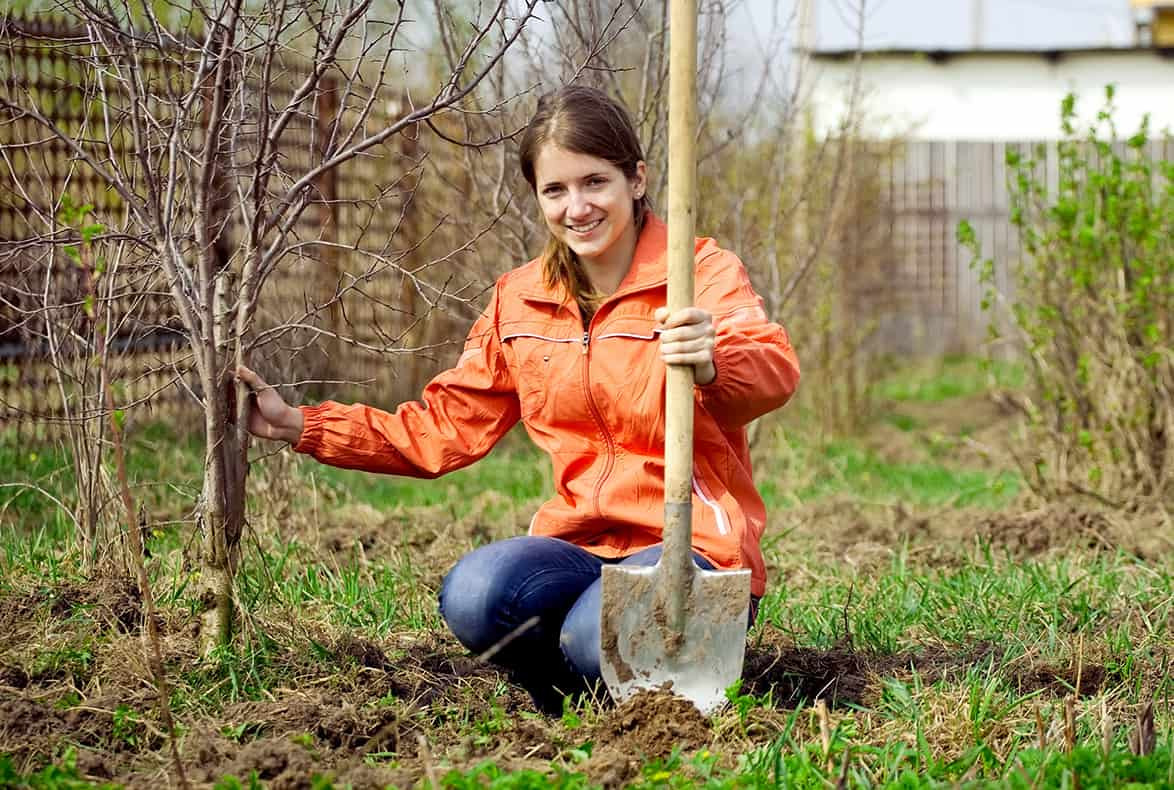 Woman with shovel helping plant trees.